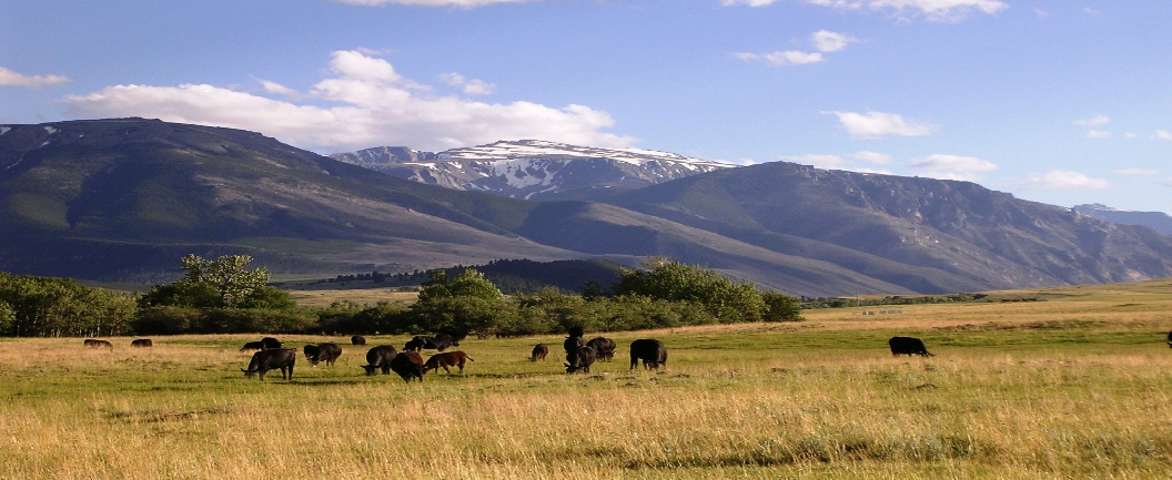 Montana ranches land farms homes horse recreational for Montana ranch house